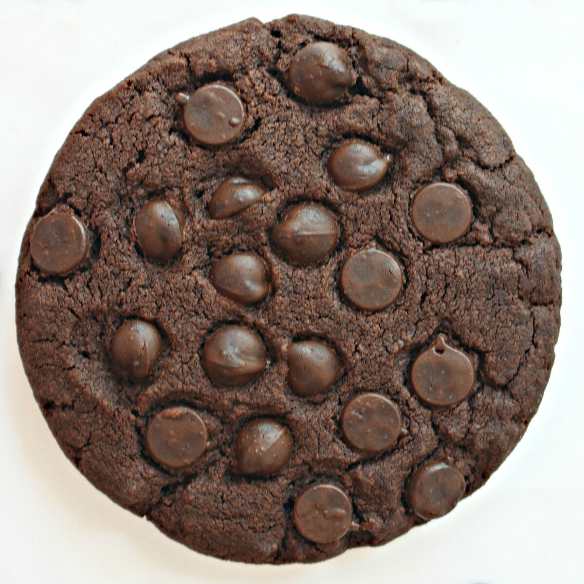 Closeup of a chocolate cookie with chocolate chips pressed into the top.